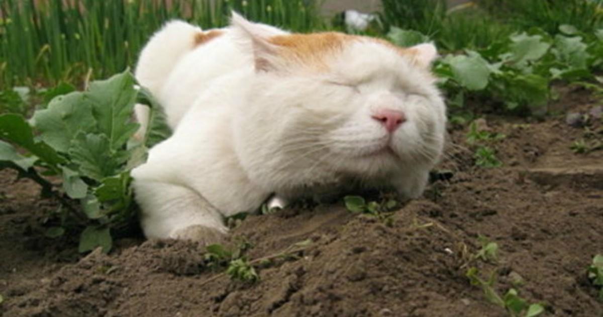 Кошка ест землю почему