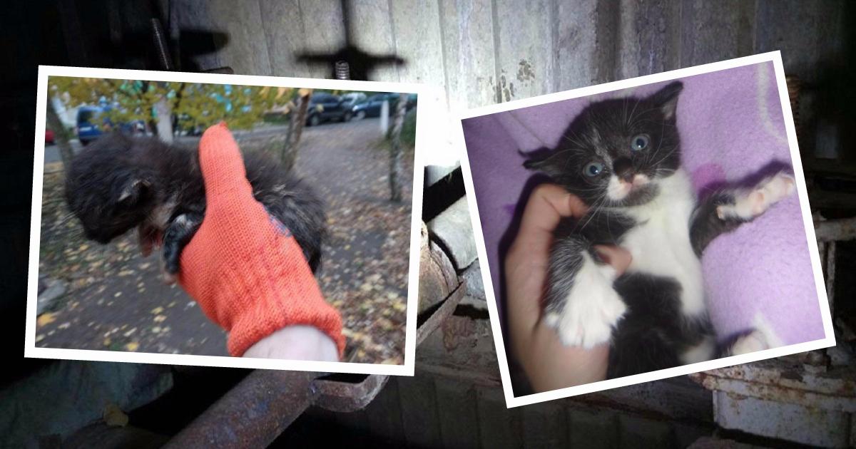 «Мяуканье доносилось из-под земли!» Маленький котёнок хотел найти себе теплое укрытие, но оказался в опасной ловушке!