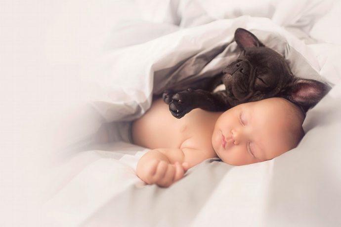 BabynBulldog01