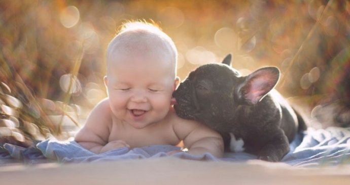 BabynBulldog06-800x533