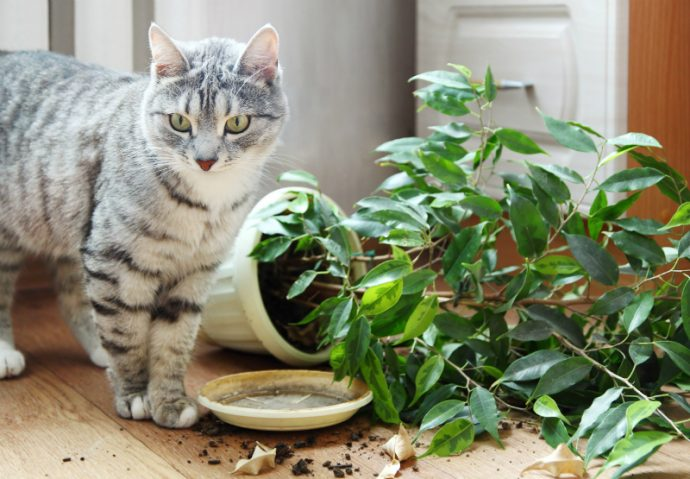 Cats-Toxic-Plants