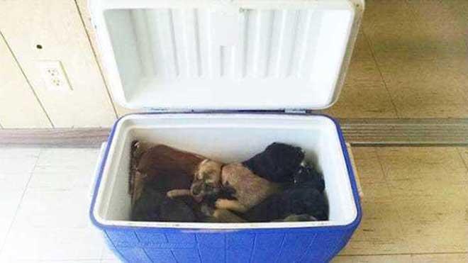 Puppy-Cooler