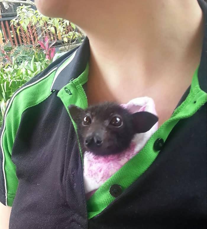 adorable-bats-27-59e6127dd6f9f__700