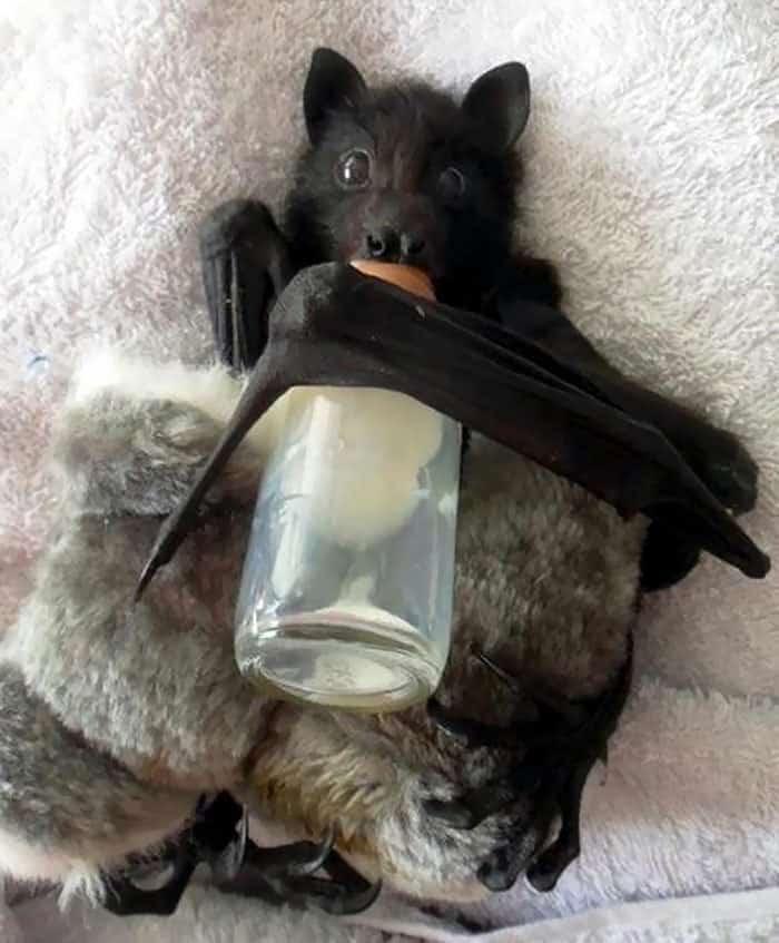 adorable-bats-37-59e7123cd617c__700 (1)