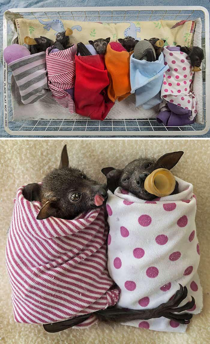 adorable-bats-98-59ea19e000485__700