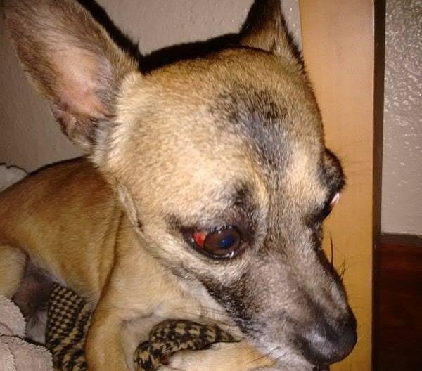 dog-alone-5-e1509650413720