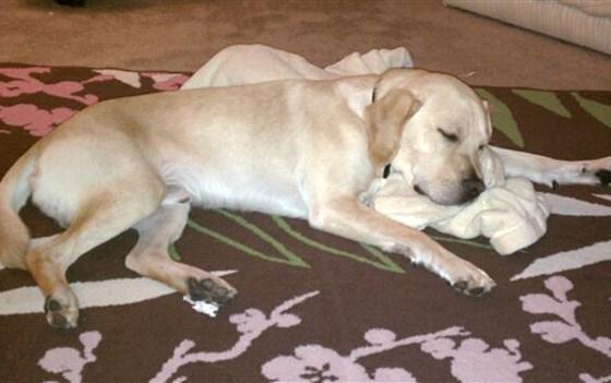 dog-blanket-today-171024-tease_f7eda446d8dbaba4c4cd98cd6d9f64ad.focal-560x351