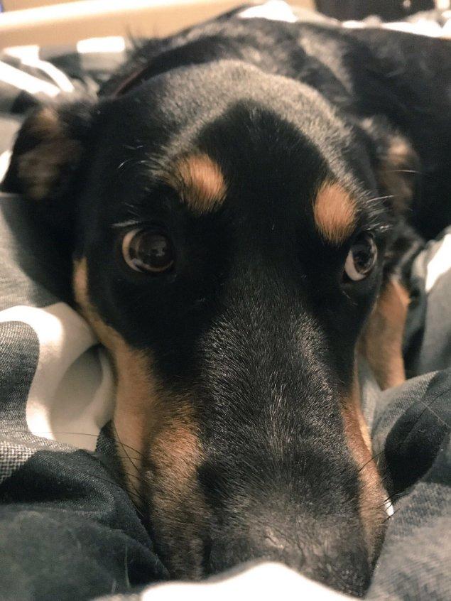 dog-fakes-sick2