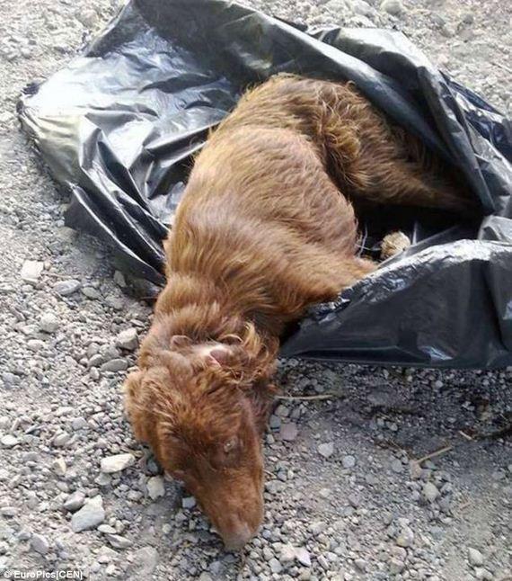 dog-in-garbage-bag-2
