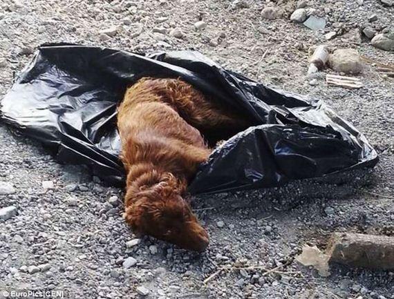 dog-in-garbage-bag-5