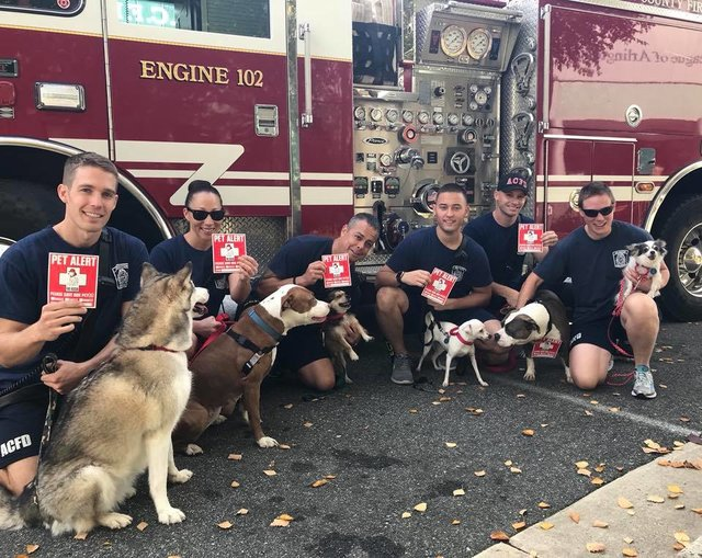 firefighters-walk-shelter-dogs7