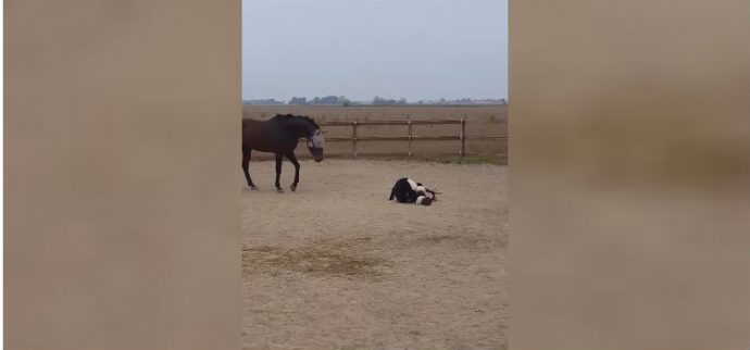 horse-loves-his-cow-2-1