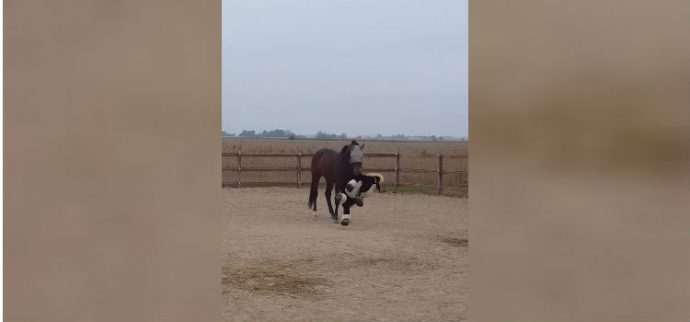 horse-loves-his-cow-6-1