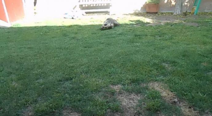 iguana-2-710x389