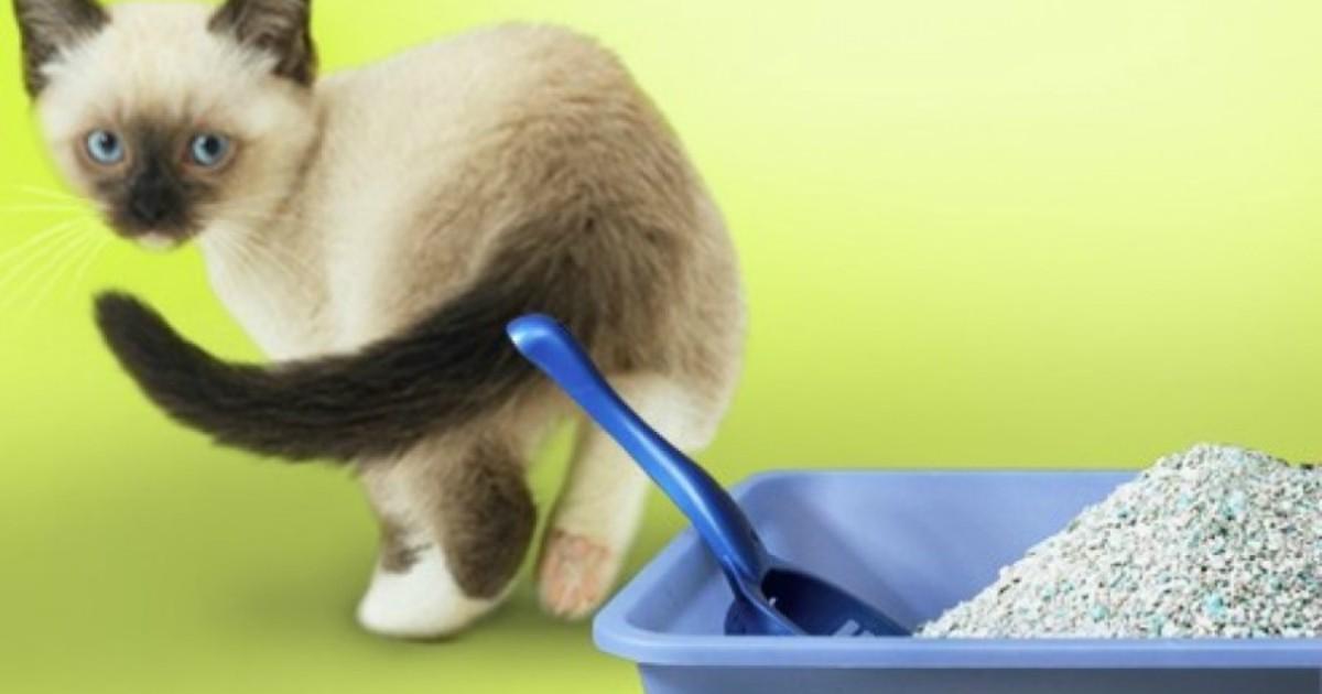 Что делать когда кошка перестала ходить в лоток