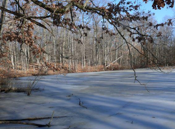 man-jumpos-in-frozen-lake-to-save-dog-8