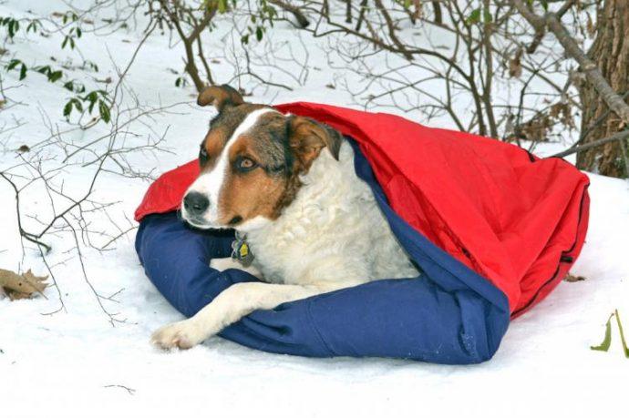 noblecamper-2-in-1-dog-bed-and-sleeping-bag-2099