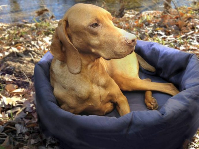 noblecamper-2-in-1-dog-bed-and-sleeping-bag-8715