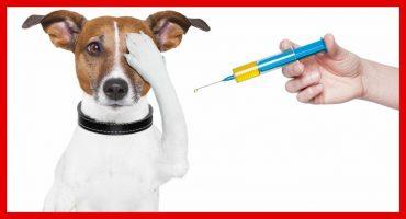 pet-vaccinations