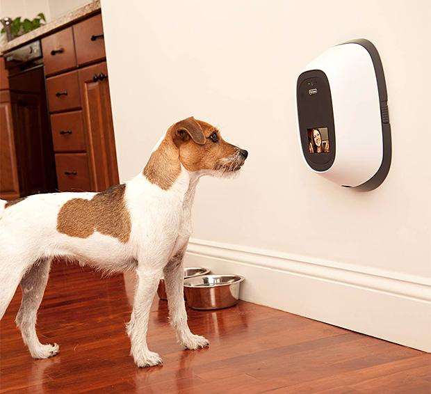 petchatz-pet-webcam-and-treat-dispenser-0