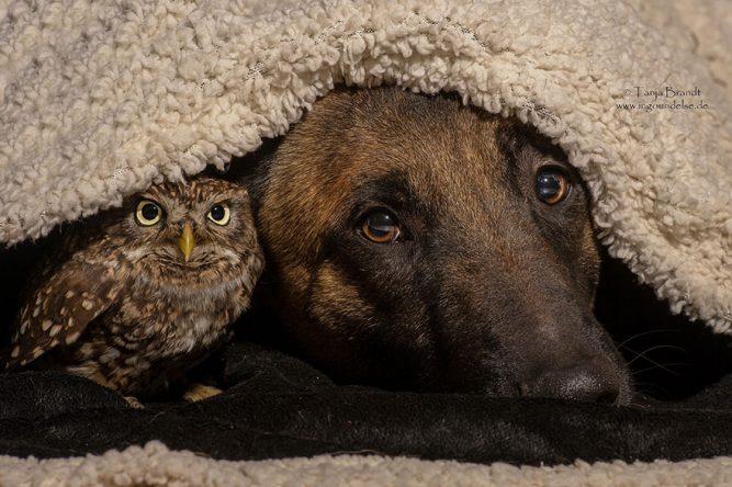 poldi-ingo-owl-dog-667x444