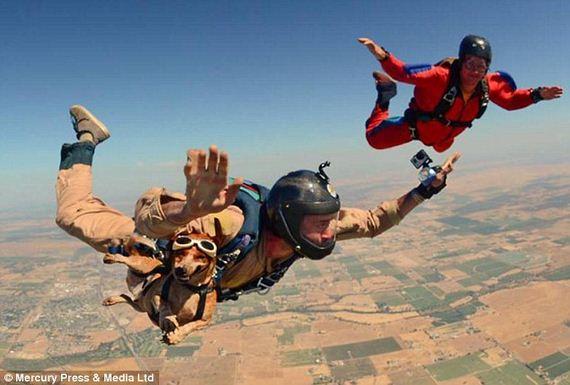 skydiving-dog-3