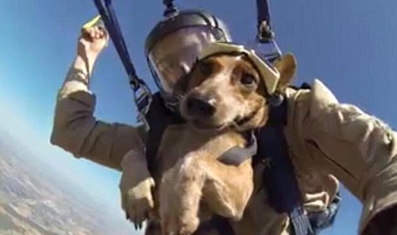 skydiving-dog-4