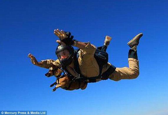 skydiving-dog-5