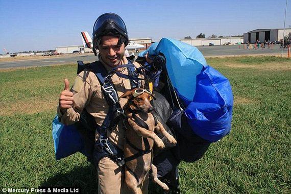 skydiving-dog-7