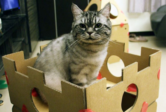 this-modular-cardboard-cat-house-is-ultimate-play-space-kitty-16495-9888547