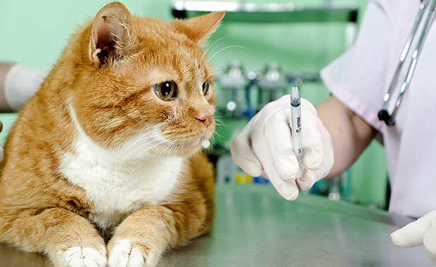 vaccine-cat1