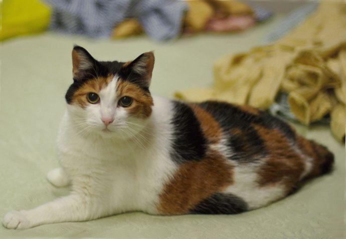 Какие породы кошек самые ЛАСКОВЫЕ? Они станут лучшими друзьями и... мурррчащей подушечкой! :) рис 3