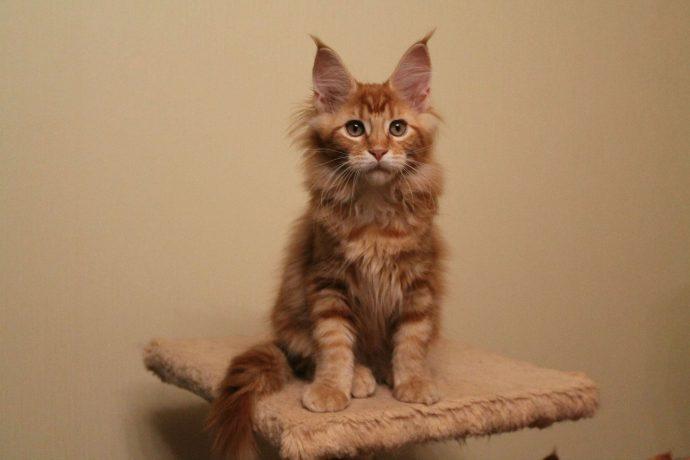 Какие породы кошек самые ЛАСКОВЫЕ? Они станут лучшими друзьями и... мурррчащей подушечкой! :) рис 2