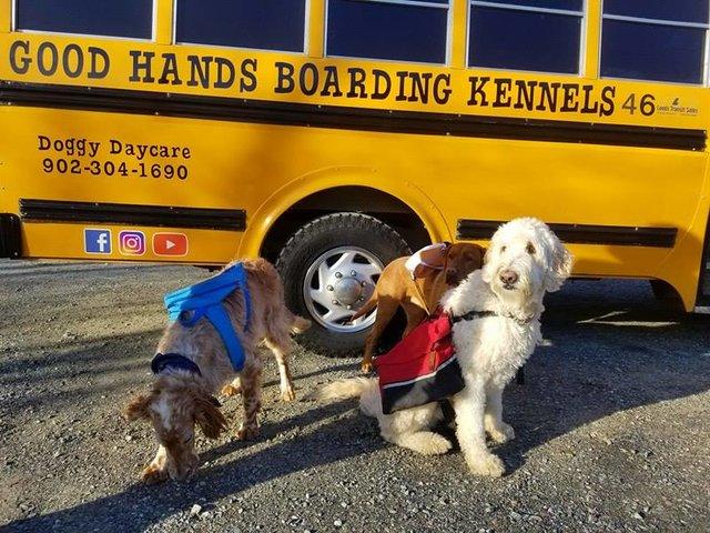 «Каждое утро этих малышей забирает школьный автобус...» В Новой Шотландии открыли настоящую школу... для собак!