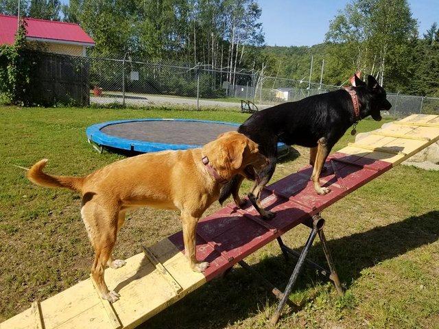 «Каждое утро этих малышей забирает школьный автобус...» В Новой Шотландии открыли настоящую школу... для собак! рис 9