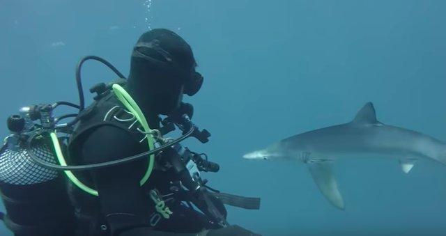 «Она взяла и поцеловала меня в нос!» История о том, как голубая акула полюбила дайвера рис 2