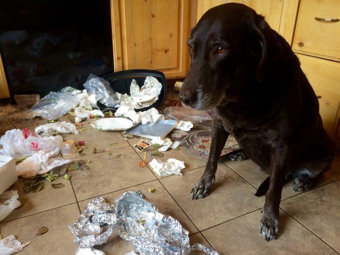 «Хозяин, я больше не буду!» О чём на самом деле говорит виноватый взгляд вашей собаки? Удивляйтесь! :) рис 4