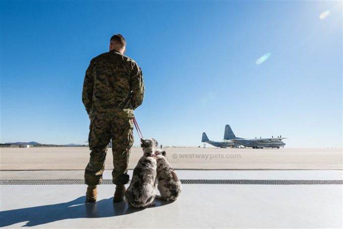 """""""Не бросайте их! Они вас очень любят!"""" Семья военных помогает животным не потерять своих хозяев рис 3"""