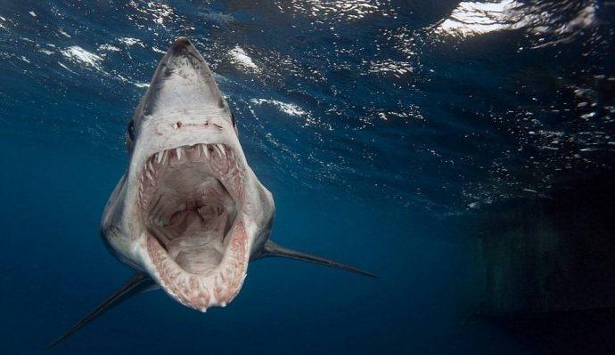 «Она взяла и поцеловала меня в нос!» История о том, как голубая акула полюбила дайвера