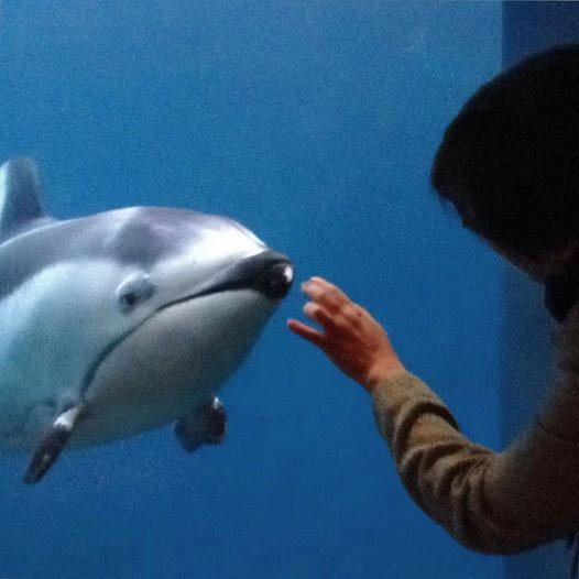 """""""Спасите Хелен!"""" Дельфин, потерявший лучшего друга, умирает от одиночества... Кто придёт к нему на помощь? рис 2"""