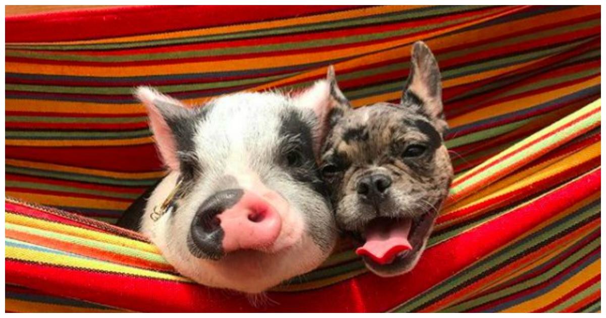 Картинки с новым годом собака и свинья, марта своими