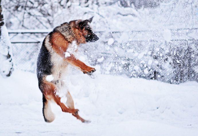 Особенности ухода за питомцем в холодное время года: решаем зимние проблемы!