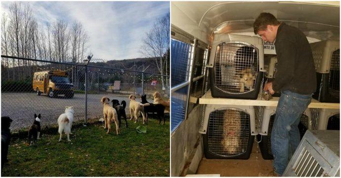 «Каждое утро этих малышей забирает школьный автобус...» В Новой Шотландии открыли настоящую школу... для собак! рис 3