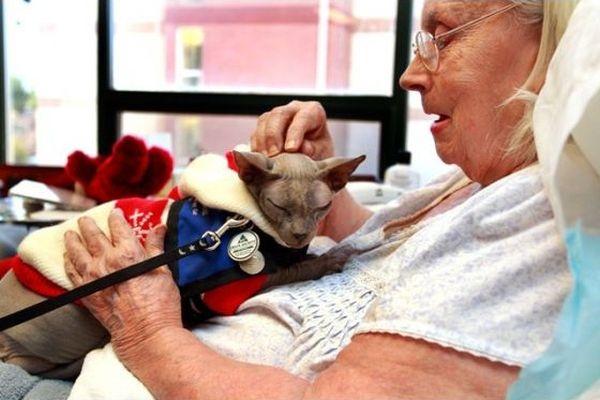 Живи 100 лет и не болей - тебе поможет котофей! От каких болезней действительно лечат нас питомцы?