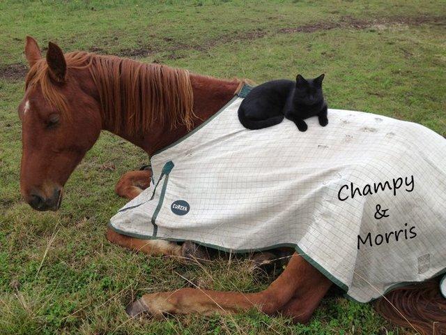 Моррис и Чампи – лучшие друзья! Невероятная история о дружбе застенчивого кота и жизнерадостной лошадки рис 2