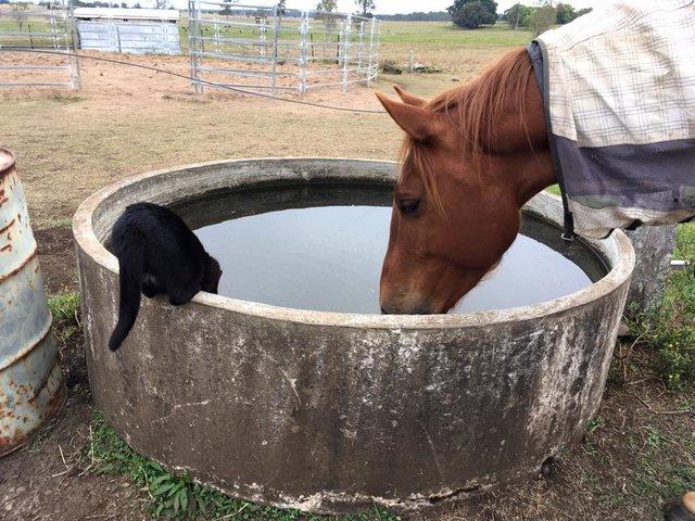 Моррис и Чампи – лучшие друзья! Невероятная история о дружбе застенчивого кота и жизнерадостной лошадки рис 4