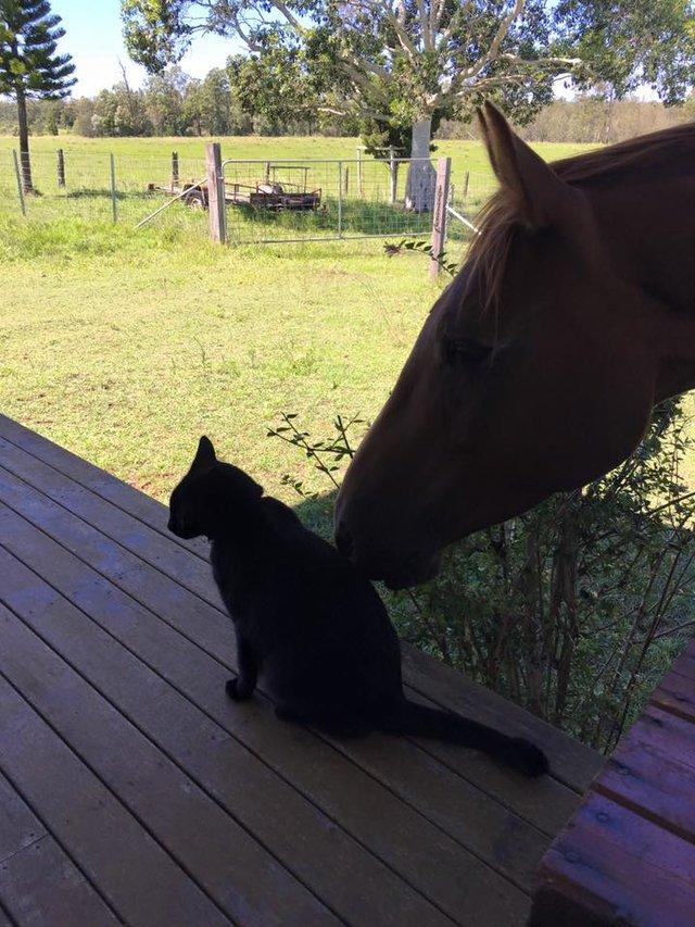 Моррис и Чампи – лучшие друзья! Невероятная история о дружбе застенчивого кота и жизнерадостной лошадки