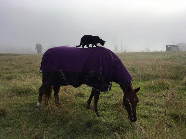 Моррис и Чампи – лучшие друзья! Невероятная история о дружбе застенчивого кота и жизнерадостной лошадки рис 5