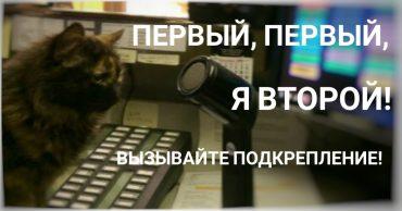 кот миниатюра-01