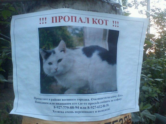 «Кот, который любил гулять сам по себе...» Почему кошки сбегают из дома?